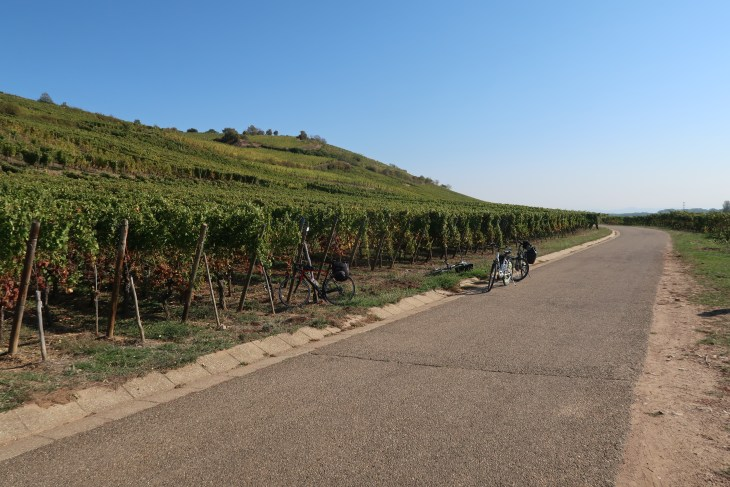 Best cycle route in France - vineyards