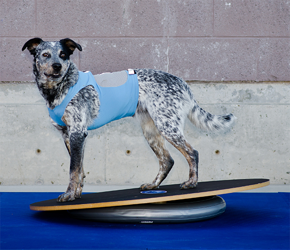 FitPAWS-Woble-Board-DonutHolder-K9FITvest