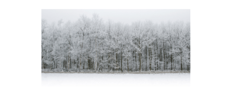 cloudy scene with snow covered trees
