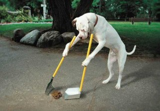 doggiepoopscooper