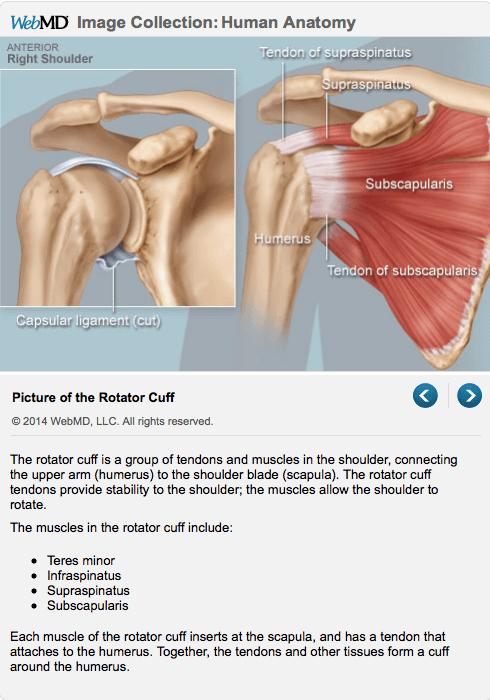 most important shoulder exercise