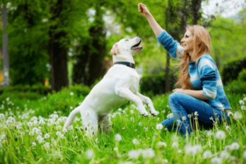 dog healthy