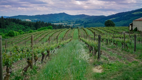 best wineries in oregon tualatin valley fittwotravel.com