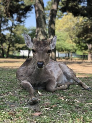 Day Trip to Nara deer park