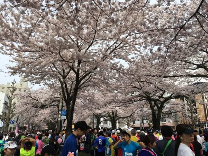 日立櫻花馬拉松的起點,名列日本賞櫻名所百選之一。