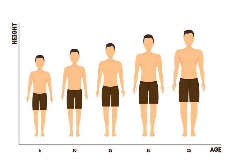 How to increase height naturally: Diet, Exercise, and Factors