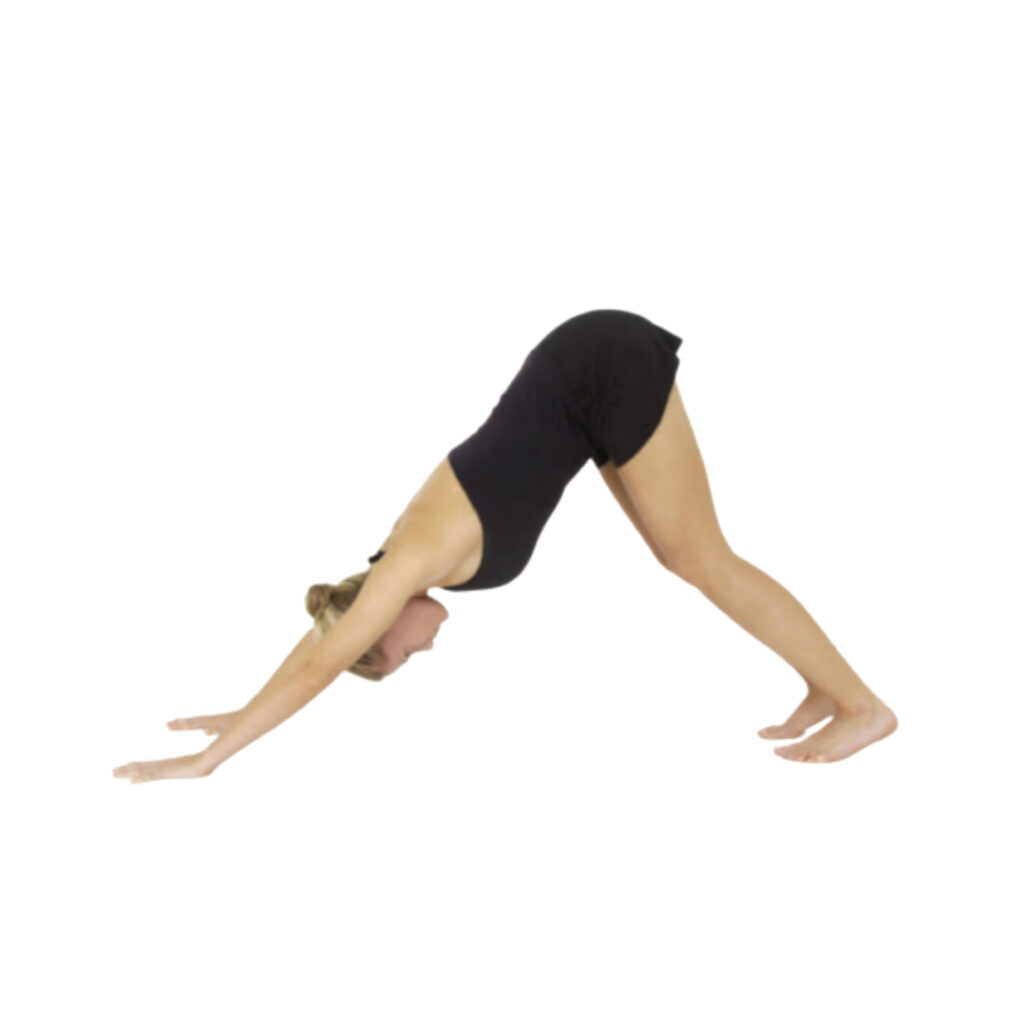 Step-2 Downward Facing Dog (Adho Mukha Svanasana) - FITZABOUT