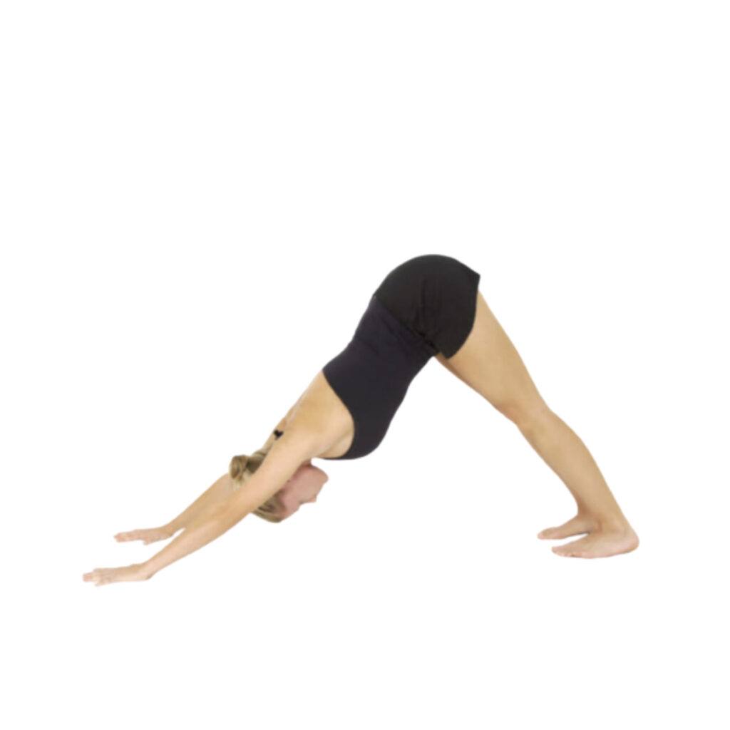 Step-3 Downward Facing Dog (Adho Mukha Svanasana) - FITZABOUT