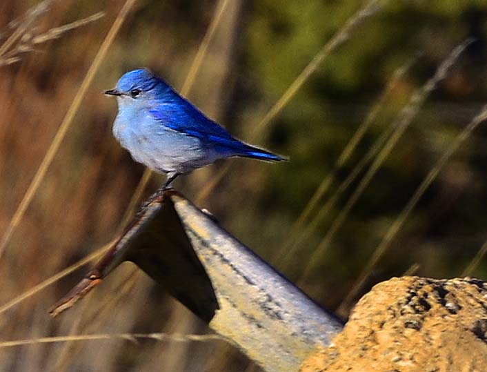 patty picture placeholder, bluebird
