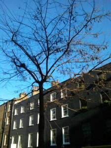 Street tree.