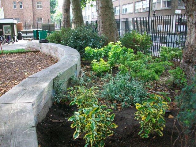 Plants in garden.