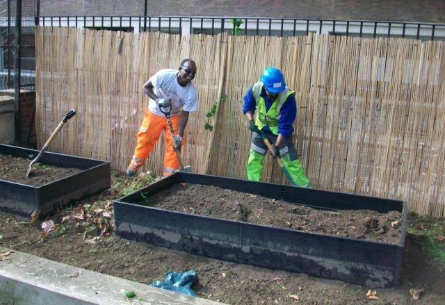 Two men digging garden.