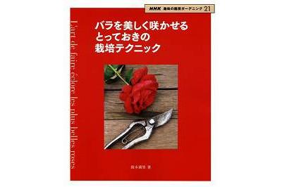 バラを美しく咲かせるとっておきの栽培テクニック