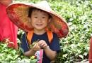 南投鹿谷茶旅行親子遊!