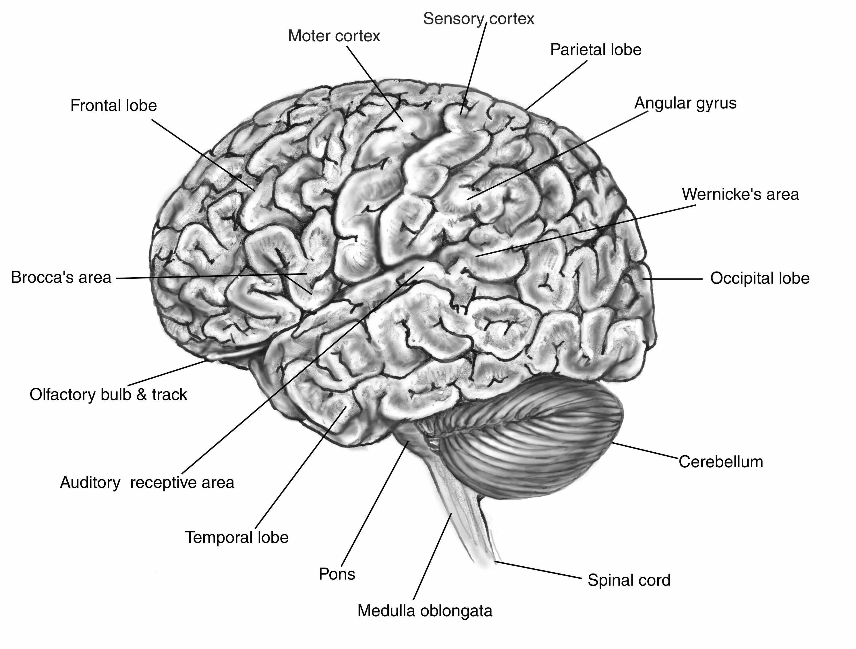 Brain Exploding Five