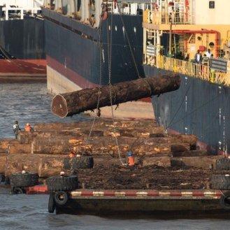 Logging Industry Wood Export Activities in Douala