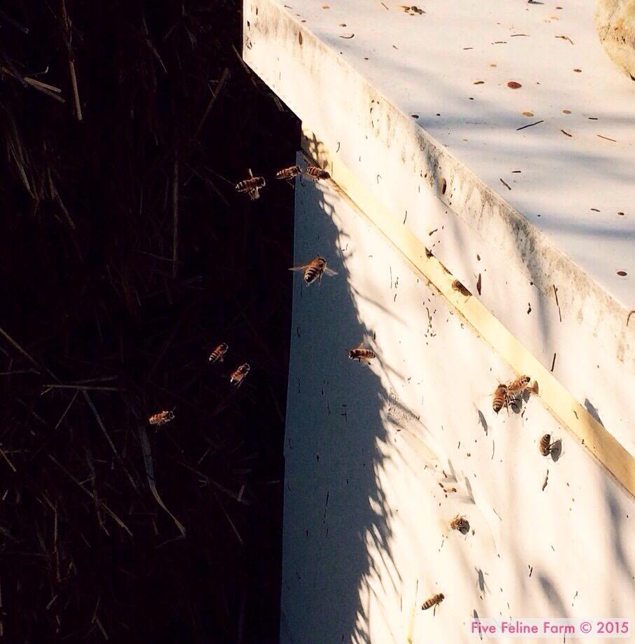 Three Fabulous Reasons to Keep Honeybees