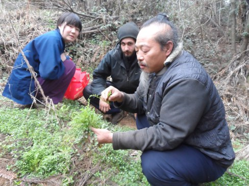 Herb picking in Five Immortals Temple