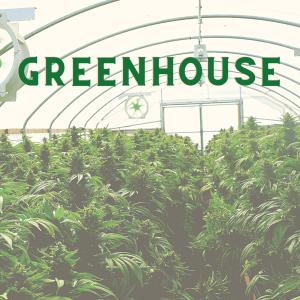 Greenhouse Flower