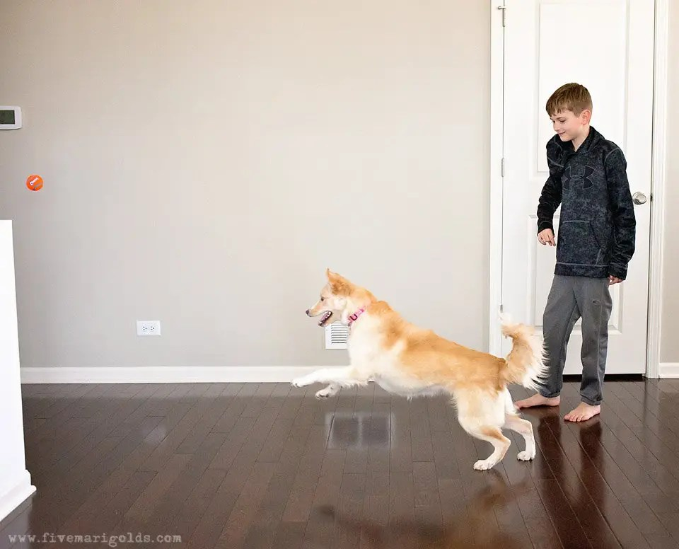 5 Tips for Photographing Dogs   Five Marigolds #FeedDogsPurina #ad