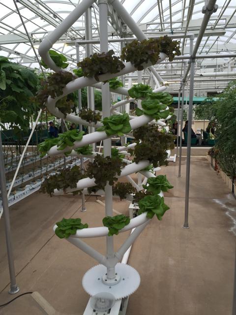 lettuce spinner