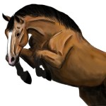 Draw Realistic Illustration Of Horse By Ivakat