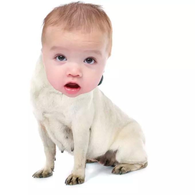 dogbaby i will morph