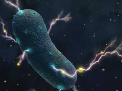 Gut bacteria's shocking secret: They produce electricity