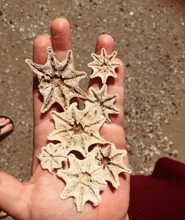 We Found A Lot Of Starfish On The Beach