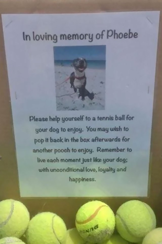 I Found This At My Local Dog Beach Today