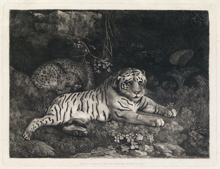 "George Stubbs, ""Two Tygers (or A Tiger and a Sleeping Leopard)"" (1788), etching (image courtesy Swann Galleries)"