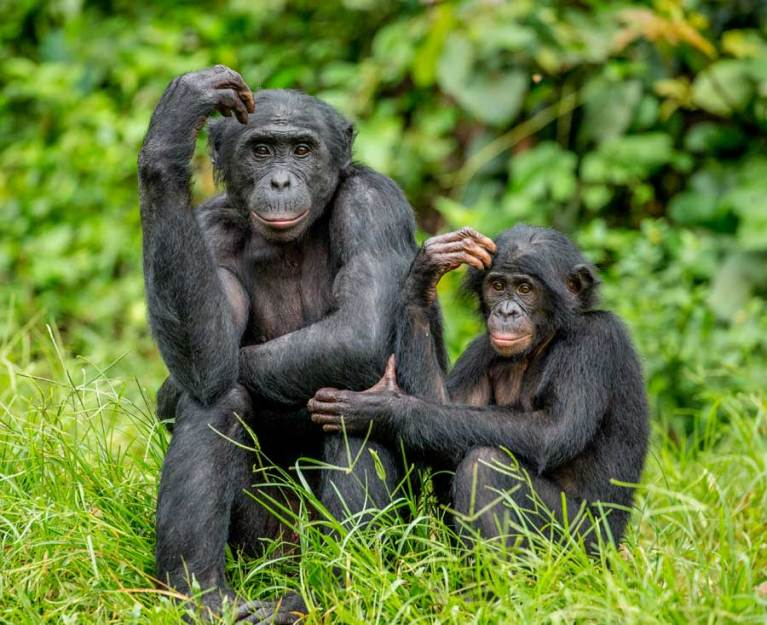 Ban Lion Farms & Canned Hunts and Protect the Bonobos: 10 Petitions You Should Sign This Week to Help Animals!