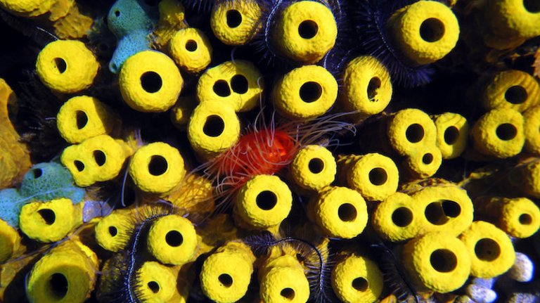Sponges collect penguin, seal, and fish DNA from the water they filter