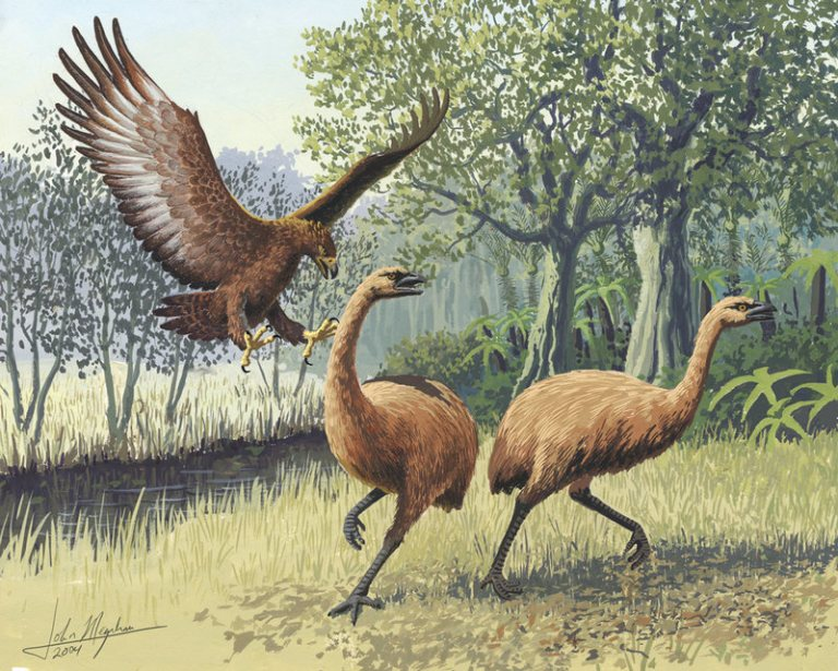 When the Māori First Settled New Zealand, They Hunted Flightless, 500-Pound Birds