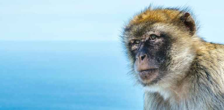Monkey teeth fossils hint several extinct species crossed the Atlantic