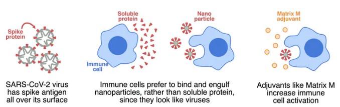 NVX-CoV2373: Here's How The Coronavirus Vaccine Based On A Flu Shot Works