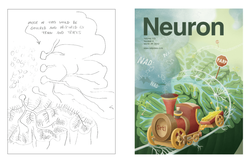 Neuron Cover Design by Daisy Chung