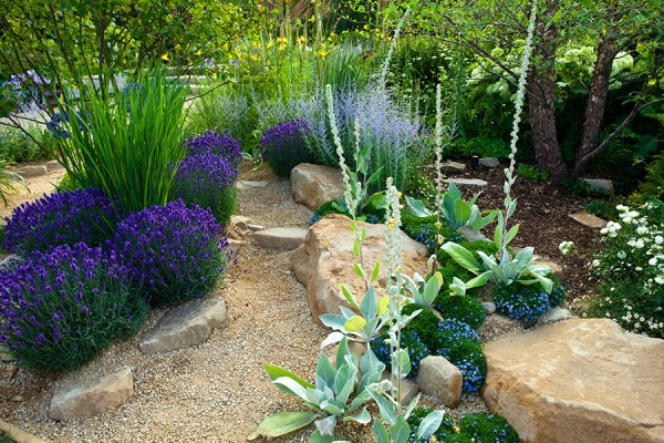 xeriscaping drought proof landscape