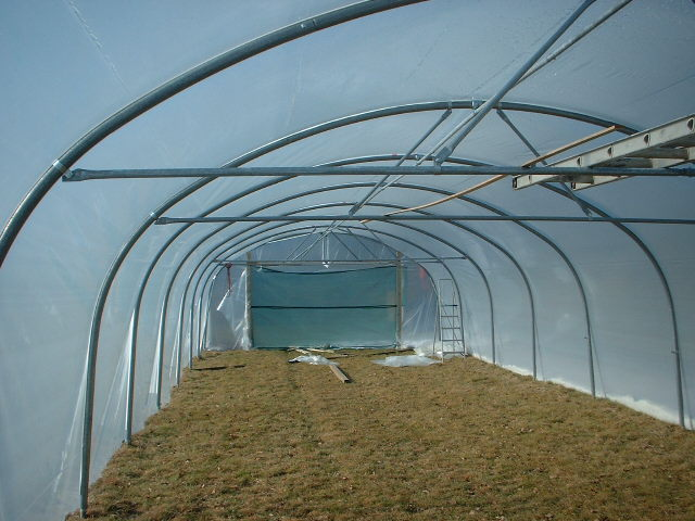 polytunnel 18 inside structure bare 18051