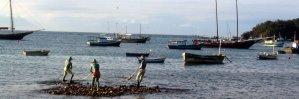 Buzios-Cabo-Freo-Brazil-brigitte-Bardot-beaches-