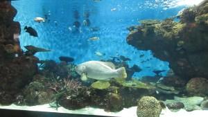 Kagoshima-City-Aquarium-Kinko-Bay