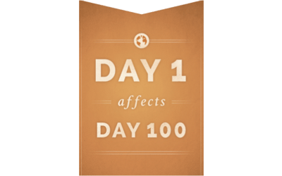 "What Are ""DAY 1 affects DAY 100 Habitudes""?"