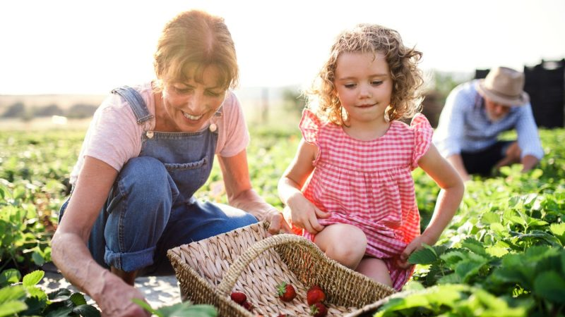 The 10 Berry Best Pick-Your-Own Strawberry Farms Near DC