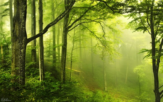 Scientists Create Recyclable Solar Cells From Trees