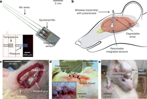 Bioresorbable silicon electronic sensors for the brain