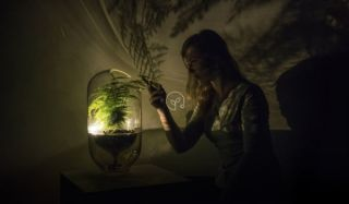 Living Light – plants become an energy system