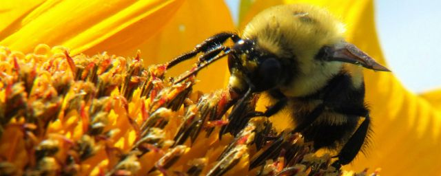 bee, busy, success
