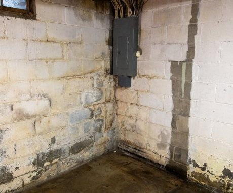 Conquer Basement Moisture and Mold