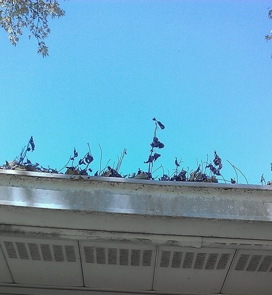 clean and fix clogged gutters
