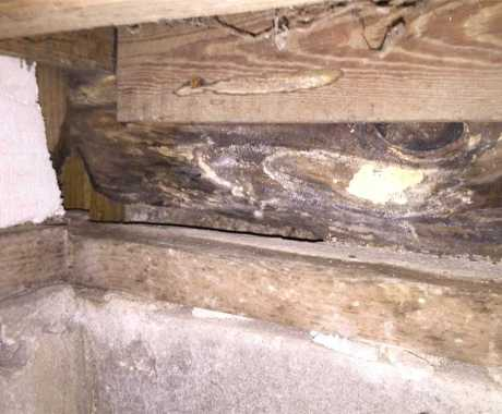 What's the Difference Between Wood Rot and Mold?